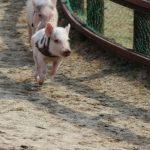 ふるさと納税~宮崎県高鍋町の豚肉3.2kg
